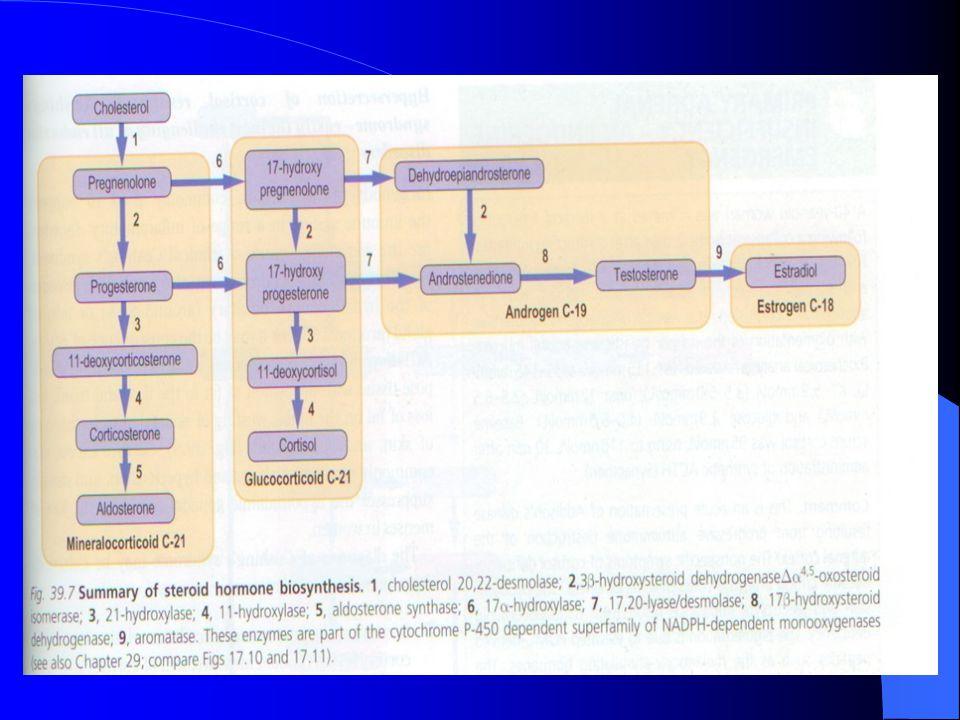 Kortizol adrenal kortekste sentezlenen başlıca glukokortikoidtir,hipofizer ACTH ın direk kontrolü altındadır.