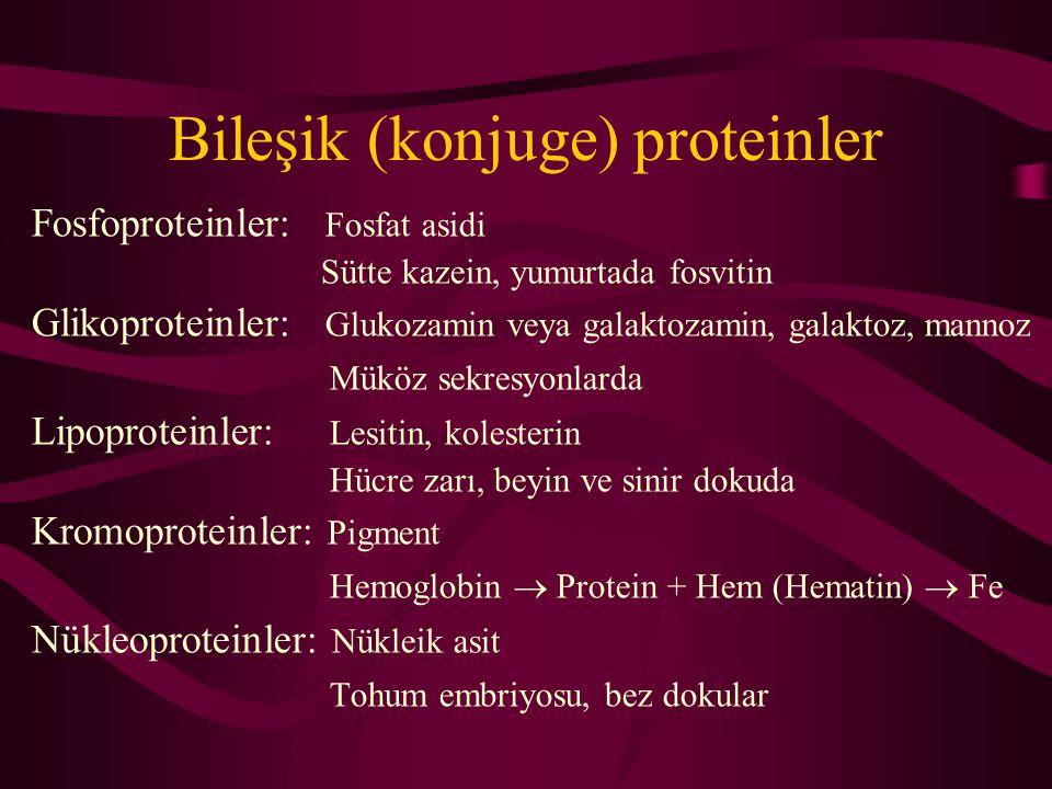 Bileşik (konjuge) proteinler Fosfoproteinler: Fosfat asidi Sütte kazein, yumurtada fosvitin Glikoproteinler: Glukozamin veya galaktozamin, galaktoz, mannoz Müköz sekresyonlarda Lipoproteinler: Lesitin, kolesterin Hücre zarı, beyin ve sinir dokuda Kromoproteinler: Pigment Hemoglobin  Protein + Hem (Hematin)  Fe Nükleoproteinler: Nükleik asit Tohum embriyosu, bez dokular