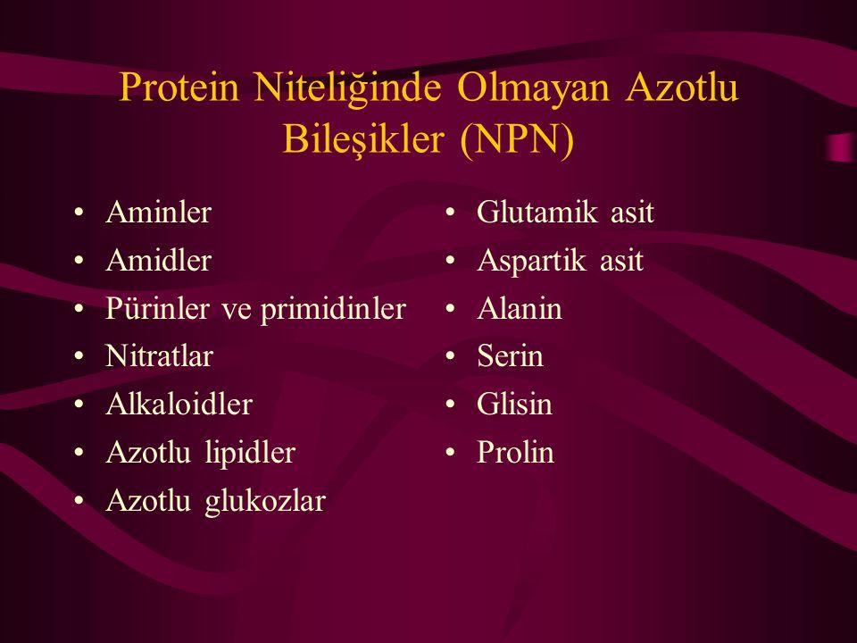Protein Niteliğinde Olmayan Azotlu Bileşikler (NPN) Aminler Amidler Pürinler ve primidinler Nitratlar Alkaloidler Azotlu lipidler Azotlu glukozlar Glutamik asit Aspartik asit Alanin Serin Glisin Prolin