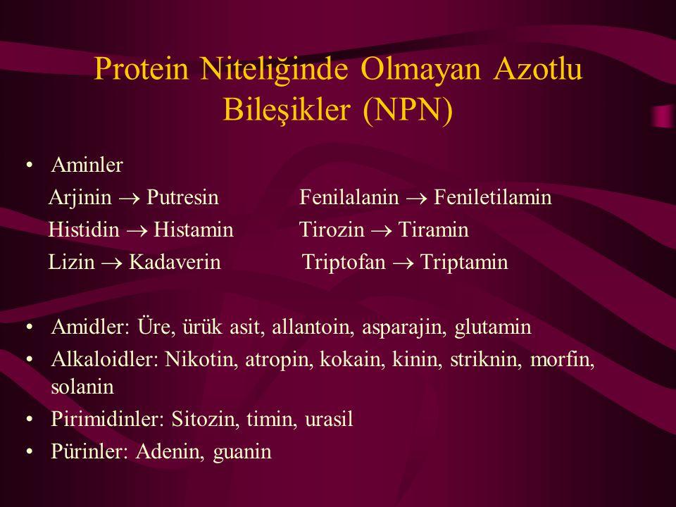 Protein Niteliğinde Olmayan Azotlu Bileşikler (NPN) Aminler Arjinin  Putresin Fenilalanin  Feniletilamin Histidin  Histamin Tirozin  Tiramin Lizin  Kadaverin Triptofan  Triptamin Amidler: Üre, ürük asit, allantoin, asparajin, glutamin Alkaloidler: Nikotin, atropin, kokain, kinin, striknin, morfin, solanin Pirimidinler: Sitozin, timin, urasil Pürinler: Adenin, guanin