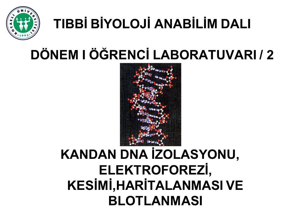 TIBBİ BİYOLOJİ ANABİLİM DALI DÖNEM I ÖĞRENCİ LABORATUVARI / 2 KANDAN DNA İZOLASYONU, ELEKTROFOREZİ, KESİMİ,HARİTALANMASI VE BLOTLANMASI