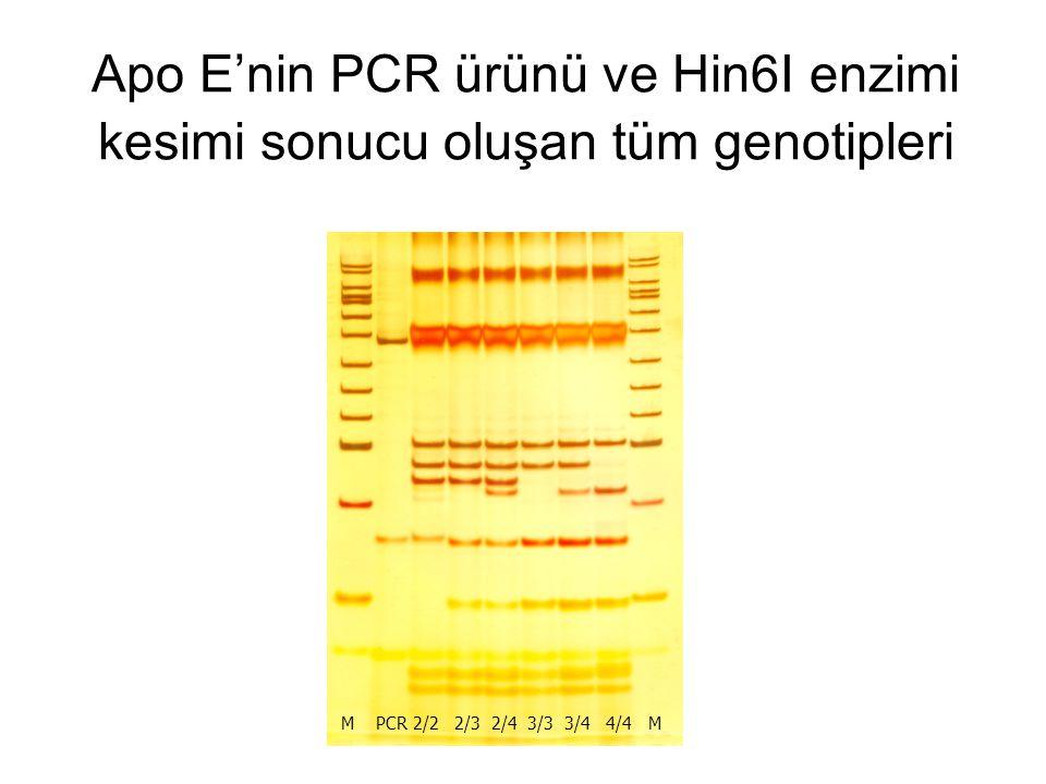 Apo E'nin PCR ürünü ve Hin6I enzimi kesimi sonucu oluşan tüm genotipleri M PCR 2/2 2/3 2/4 3/3 3/4 4/4 M