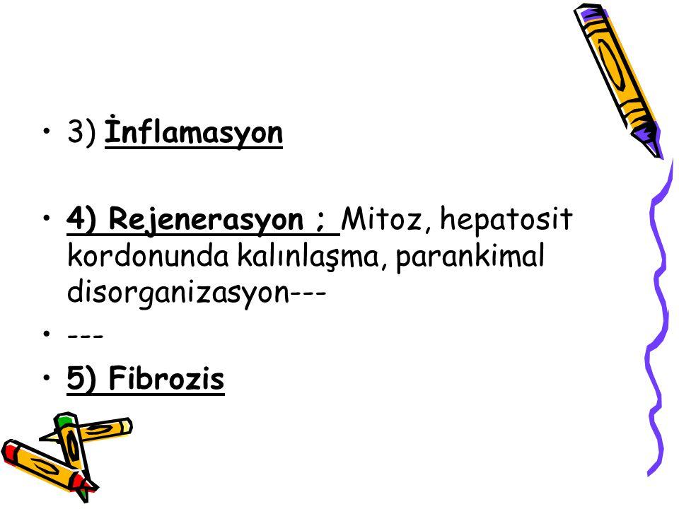 3) İnflamasyon 4) Rejenerasyon ; Mitoz, hepatosit kordonunda kalınlaşma, parankimal disorganizasyon--- --- 5) Fibrozis