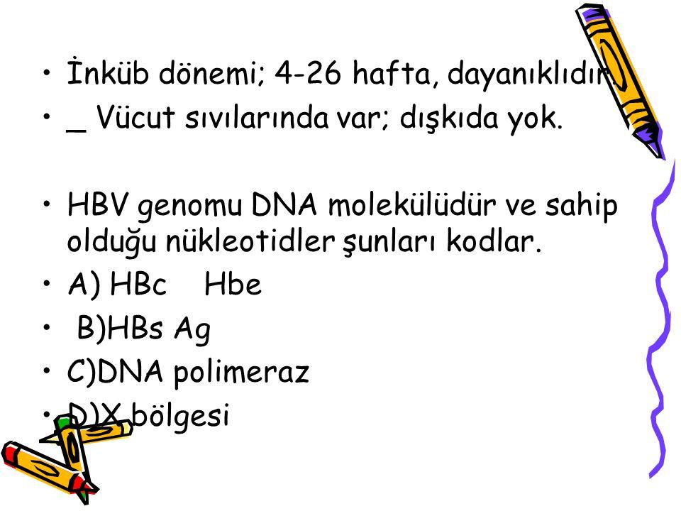 İnküb dönemi; 4-26 hafta, dayanıklıdır. _ Vücut sıvılarında var; dışkıda yok. HBV genomu DNA molekülüdür ve sahip olduğu nükleotidler şunları kodlar.