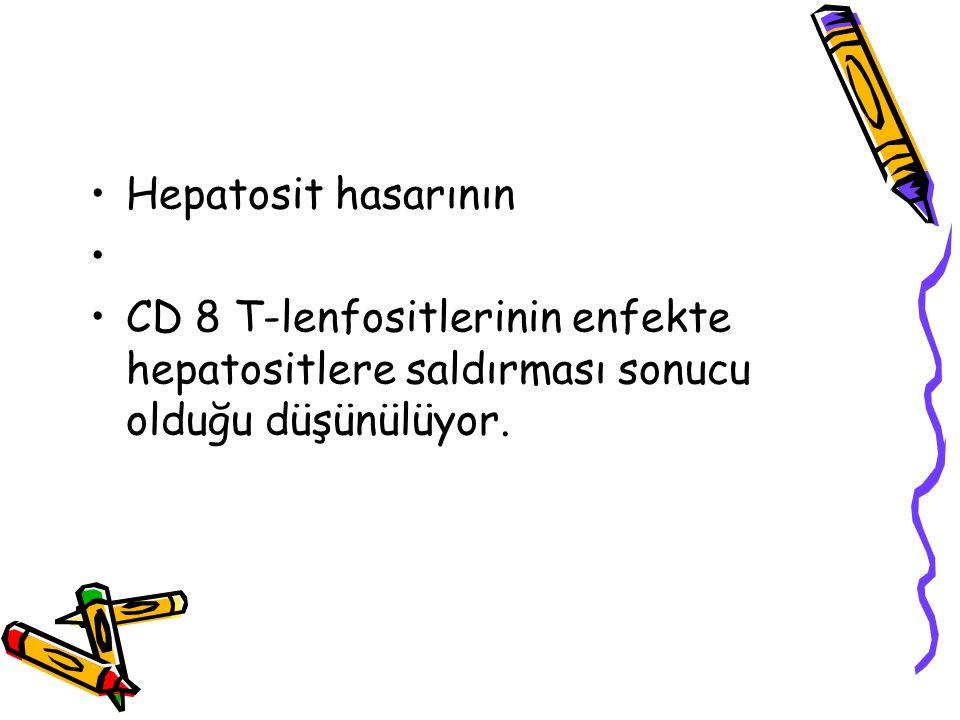 Hepatosit hasarının CD 8 T-lenfositlerinin enfekte hepatositlere saldırması sonucu olduğu düşünülüyor.