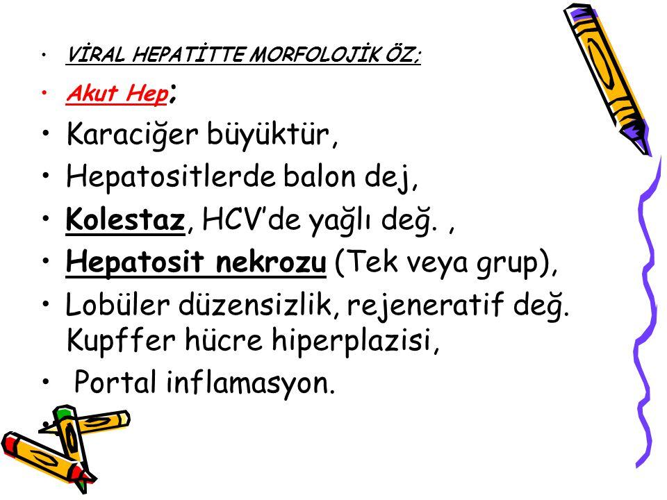 VİRAL HEPATİTTE MORFOLOJİK ÖZ; Akut Hep ; Karaciğer büyüktür, Hepatositlerde balon dej, Kolestaz, HCV'de yağlı değ., Hepatosit nekrozu (Tek veya grup)