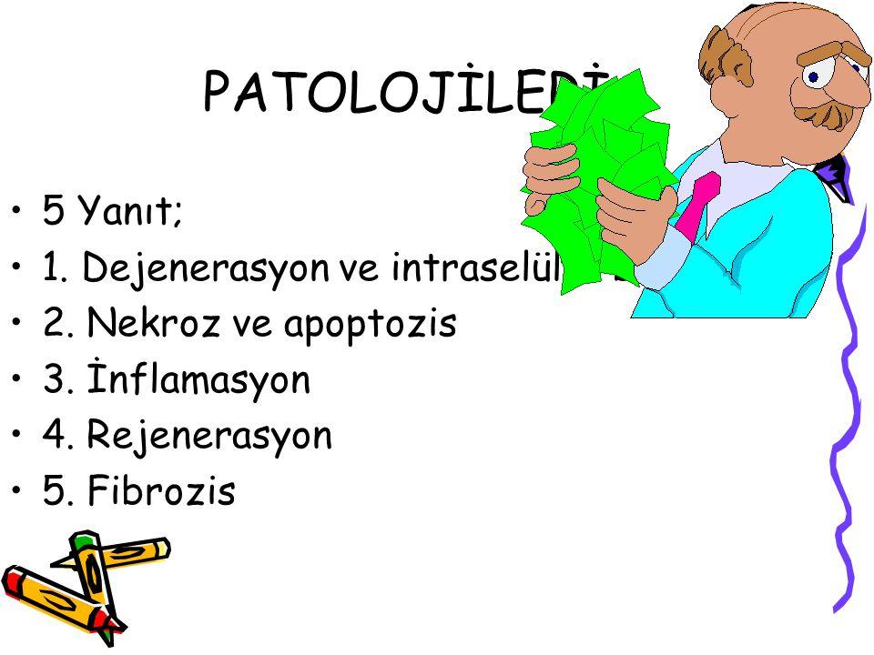 PATOLOJİLERİ 5 Yanıt; 1. Dejenerasyon ve intraselüler birikim 2. Nekroz ve apoptozis 3. İnflamasyon 4. Rejenerasyon 5. Fibrozis