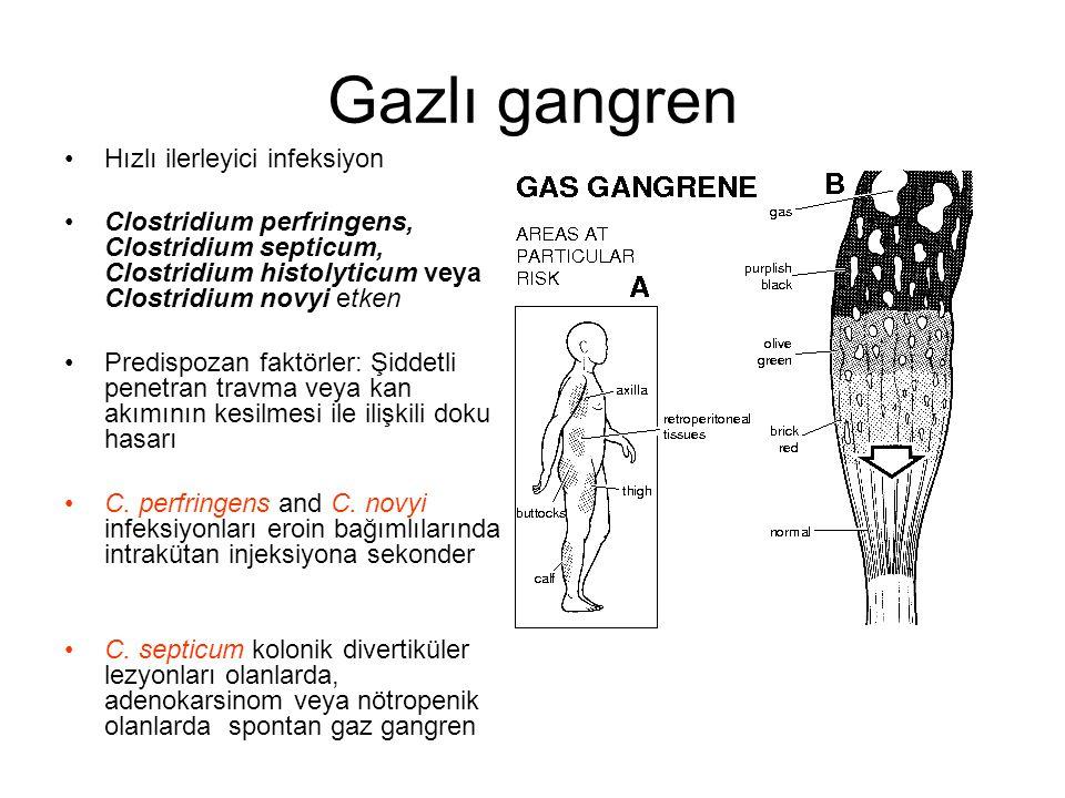 Gazlı gangren Hızlı ilerleyici infeksiyon Clostridium perfringens, Clostridium septicum, Clostridium histolyticum veya Clostridium novyi etken Predisp