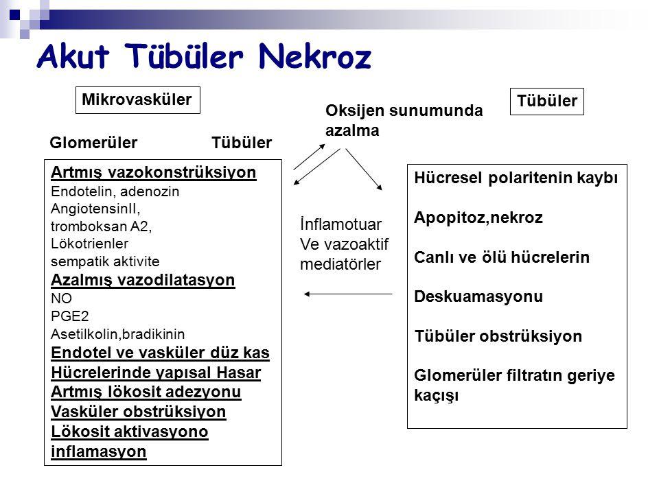 Akut Tübüler Nekroz Artmış vazokonstrüksiyon Endotelin, adenozin AngiotensinII, tromboksan A2, Lökotrienler sempatik aktivite Azalmış vazodilatasyon N