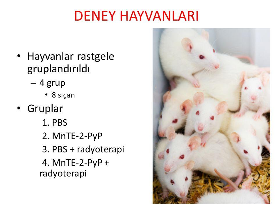 DENEY HAYVANLARI Hayvanlar rastgele gruplandırıldı – 4 grup 8 sıçan Gruplar 1. PBS 2. MnTE-2-PyP 3. PBS + radyoterapi 4. MnTE-2-PyP + radyoterapi
