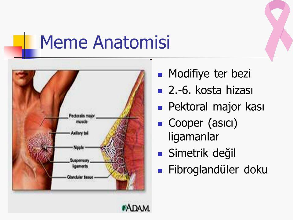 Meme Anatomisi Modifiye ter bezi 2.-6. kosta hizası Pektoral major kası Cooper (asıcı) ligamanlar Simetrik değil Fibroglandüler doku