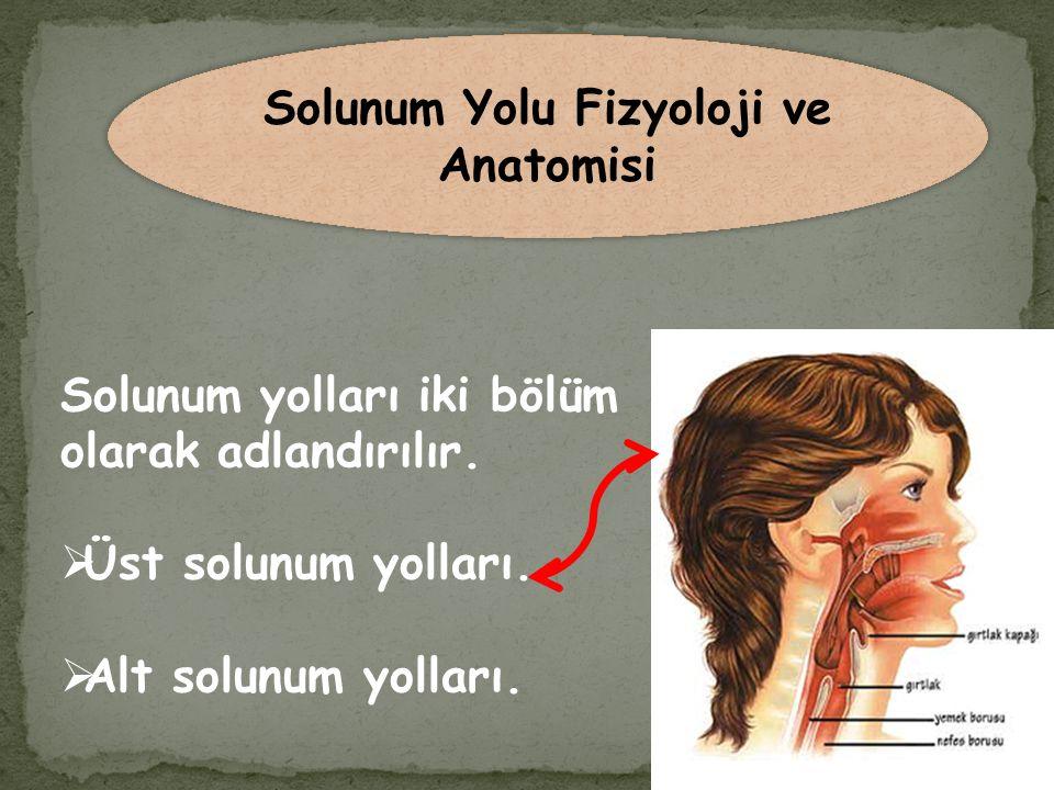 Solunum yolları iki bölüm olarak adlandırılır.  Üst solunum yolları.  Alt solunum yolları. Solunum Yolu Fizyoloji ve Anatomisi