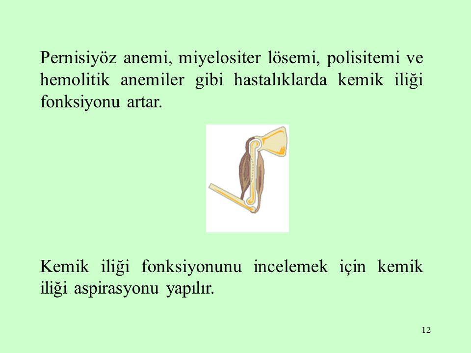12 Pernisiyöz anemi, miyelositer lösemi, polisitemi ve hemolitik anemiler gibi hastalıklarda kemik iliği fonksiyonu artar.