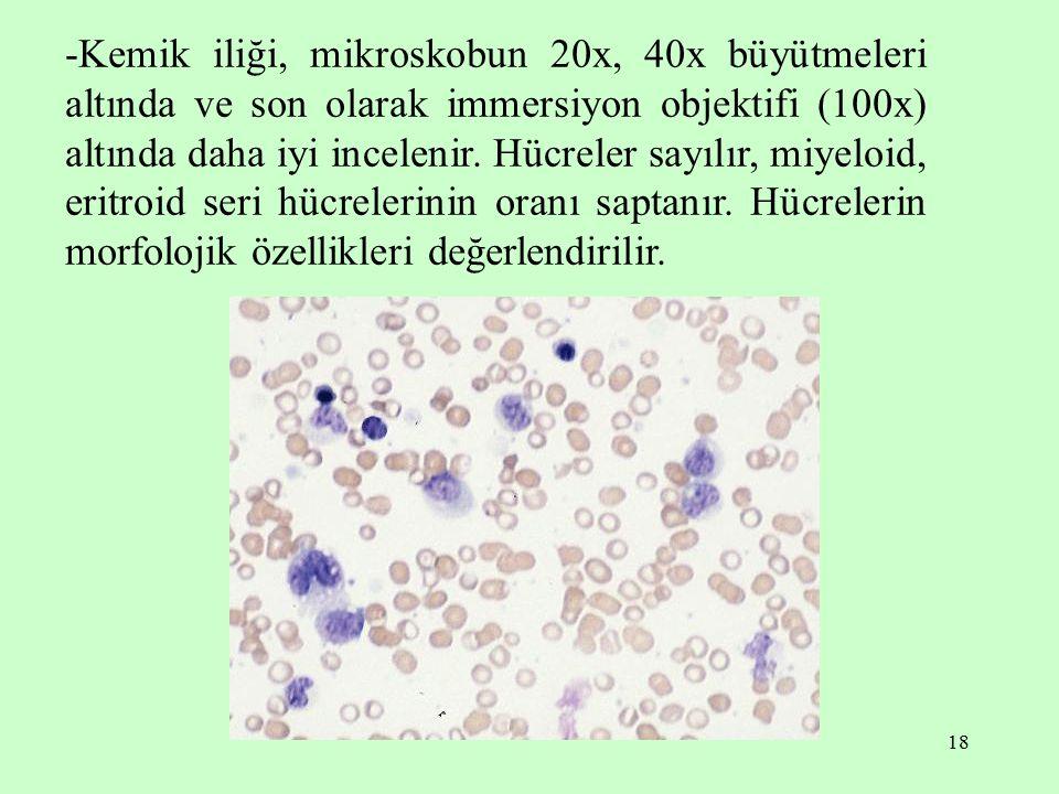 18 -Kemik iliği, mikroskobun 20x, 40x büyütmeleri altında ve son olarak immersiyon objektifi (100x) altında daha iyi incelenir. Hücreler sayılır, miye