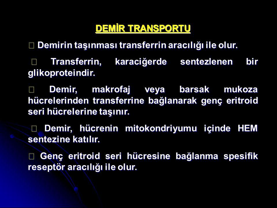 DEMİR TRANSPORTU ◆ Demirin taşınması transferrin aracılığı ile olur. ◆ Transferrin, karaciğerde sentezlenen bir glikoproteindir. ◆ Transferrin, karaci