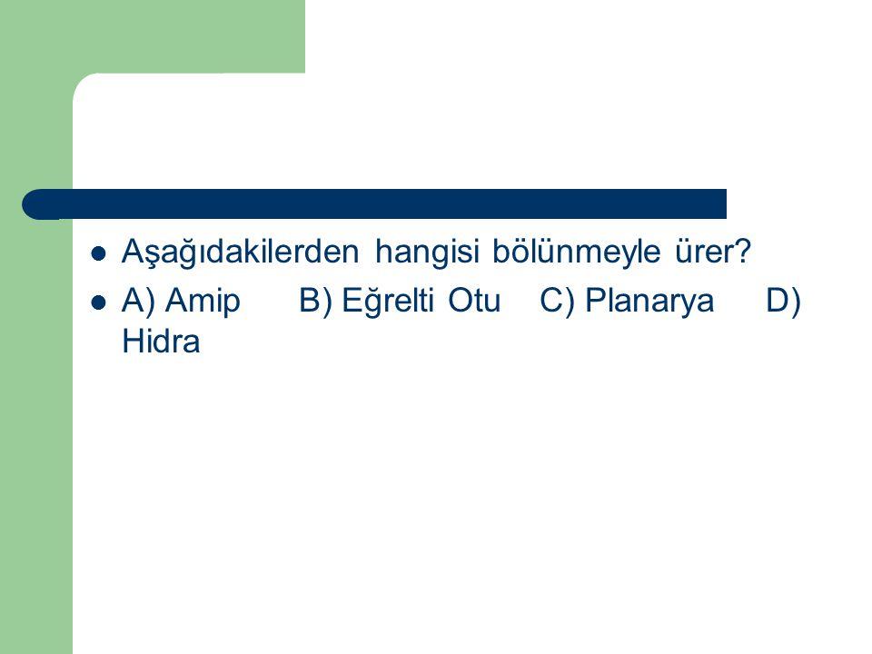 Aşağıdakilerden hangisi bölünmeyle ürer? A) Amip B) Eğrelti Otu C) Planarya D) Hidra