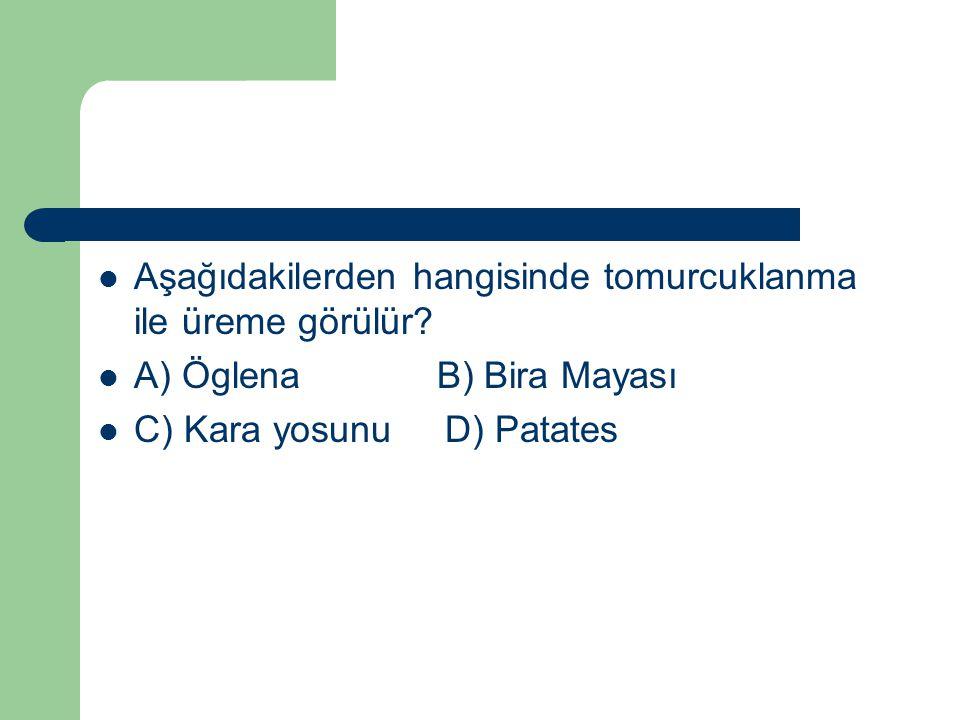 Aşağıdakilerden hangisinde tomurcuklanma ile üreme görülür? A) Öglena B) Bira Mayası C) Kara yosunu D) Patates