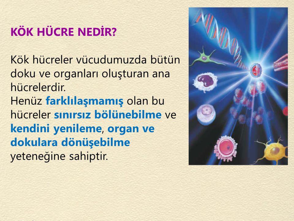 KÖK HÜCRE NEDİR? Kök hücreler vücudumuzda bütün doku ve organları oluşturan ana hücrelerdir. Henüz farklılaşmamış olan bu hücreler sınırsız bölünebilm