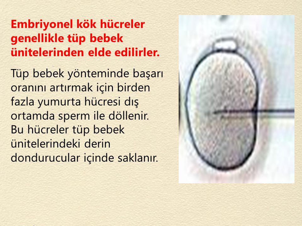 Embriyonel kök hücreler genellikle tüp bebek ünitelerinden elde edilirler. Tüp bebek yönteminde başarı oranını artırmak için birden fazla yumurta hücr