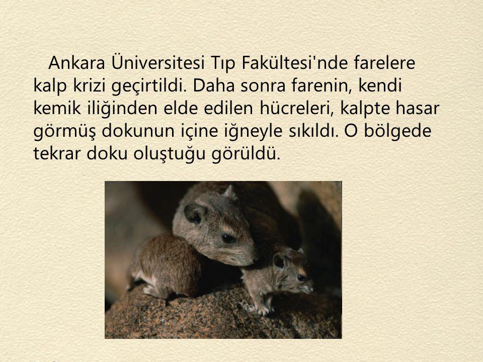 Ankara Üniversitesi Tıp Fakültesi'nde farelere kalp krizi geçirtildi. Daha sonra farenin, kendi kemik iliğinden elde edilen hücreleri, kalpte hasar gö