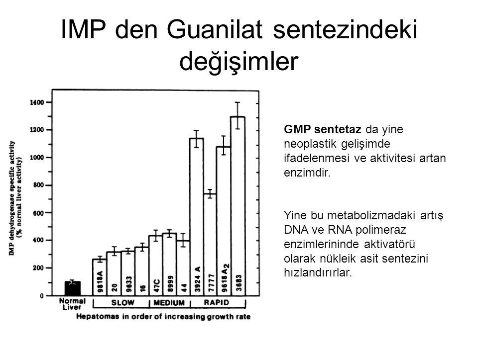 IMP den Guanilat sentezindeki değişimler GMP sentetaz da yine neoplastik gelişimde ifadelenmesi ve aktivitesi artan enzimdir. Yine bu metabolizmadaki