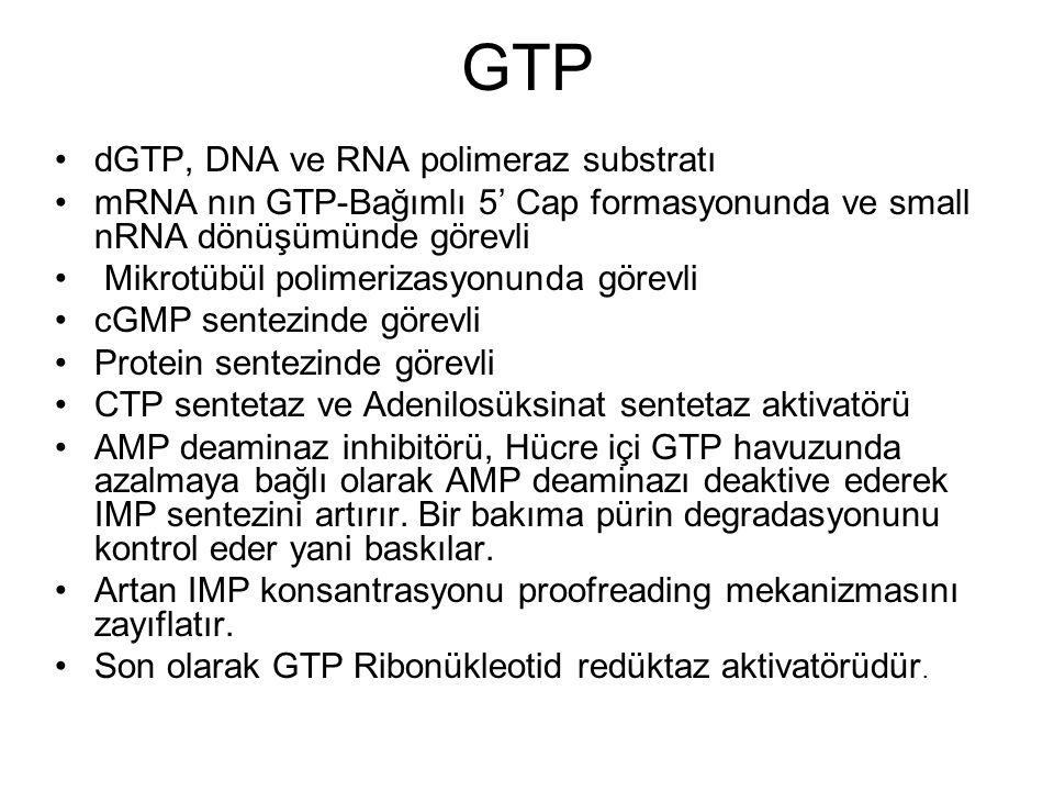 GTP dGTP, DNA ve RNA polimeraz substratı mRNA nın GTP-Bağımlı 5' Cap formasyonunda ve small nRNA dönüşümünde görevli Mikrotübül polimerizasyonunda gör