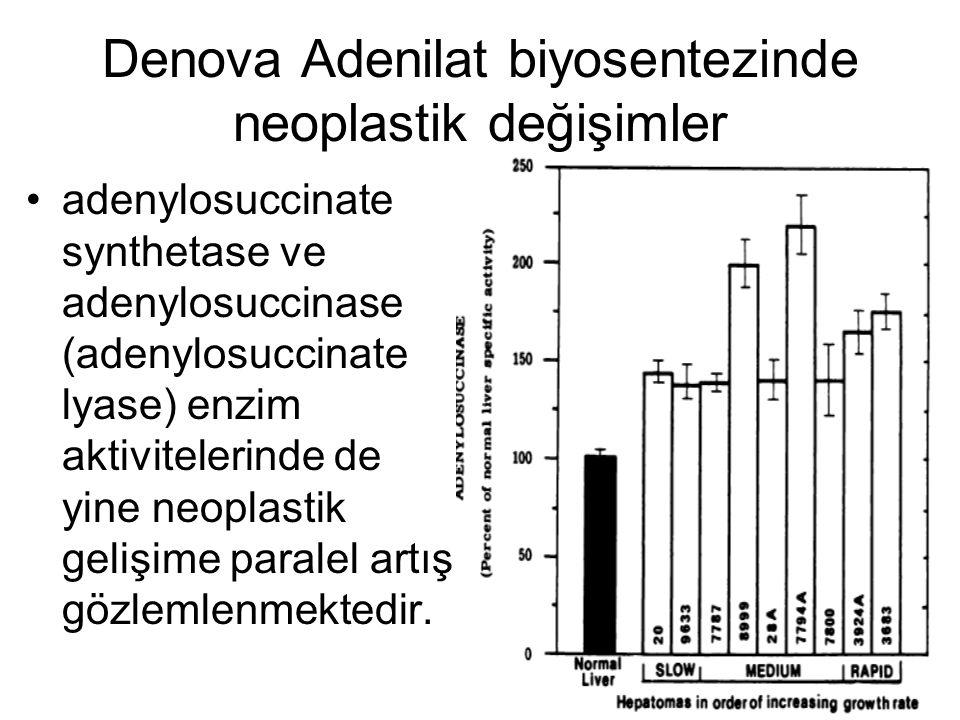 Denova Adenilat biyosentezinde neoplastik değişimler adenylosuccinate synthetase ve adenylosuccinase (adenylosuccinate lyase) enzim aktivitelerinde de