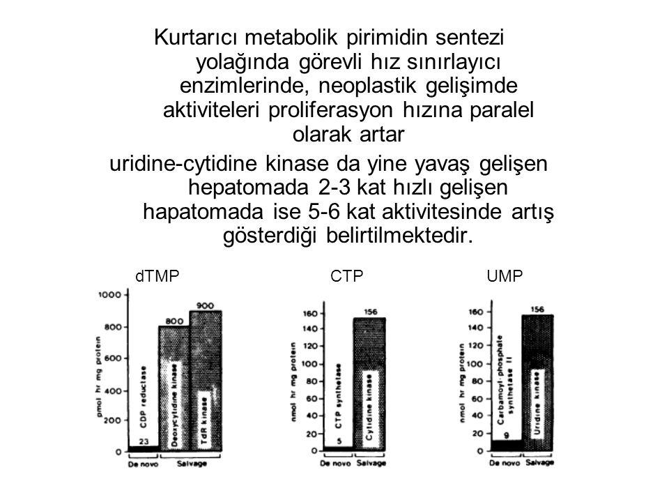 Kurtarıcı metabolik pirimidin sentezi yolağında görevli hız sınırlayıcı enzimlerinde, neoplastik gelişimde aktiviteleri proliferasyon hızına paralel o