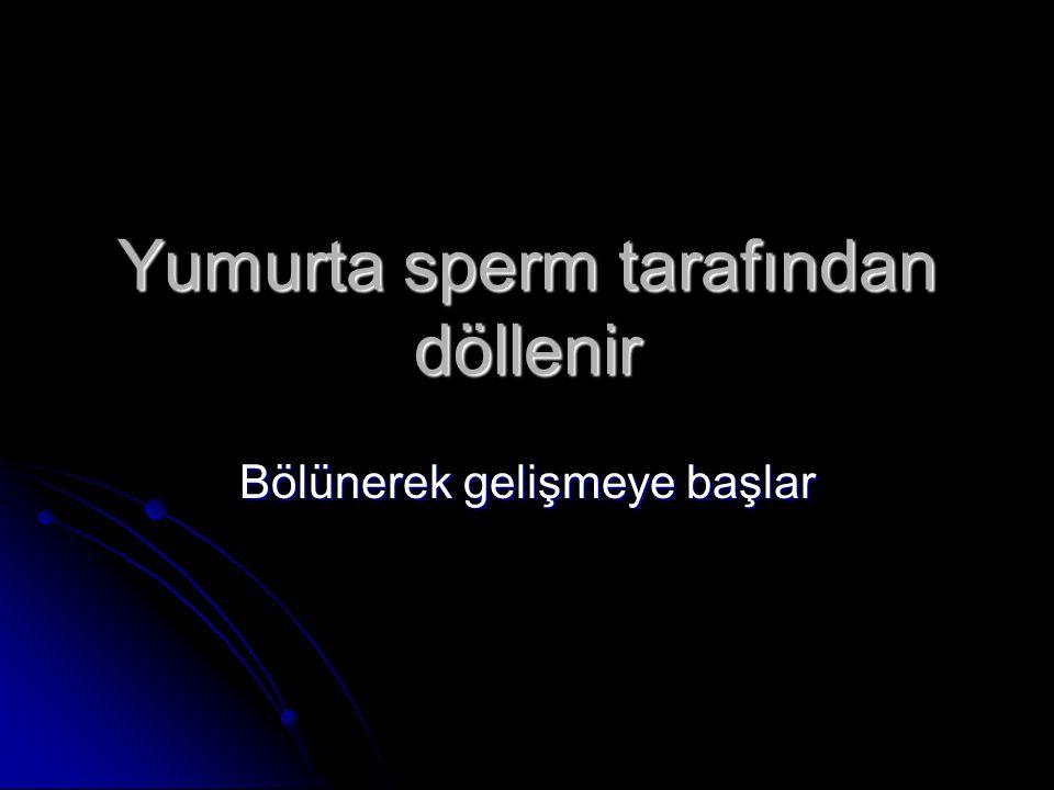 CANLILARDA ÜREME HÜCRELERİ Sperm Hücresi(Erkek üreme Hücresi) Sperm Hücresi(Erkek üreme Hücresi) Yumurta Hücresi(Dişi üreme Hücresi) Yumurta Hücresi(D
