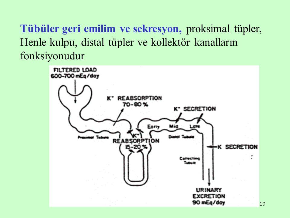 10 Tübüler geri emilim ve sekresyon, proksimal tüpler, Henle kulpu, distal tüpler ve kollektör kanalların fonksiyonudur