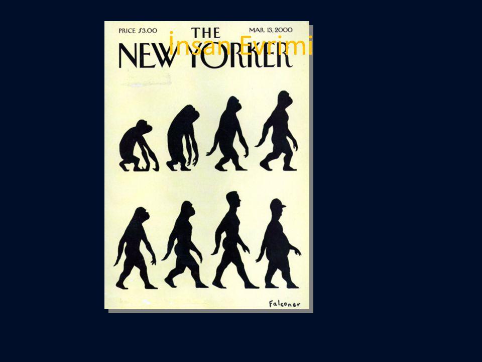 İnsan Evrimi
