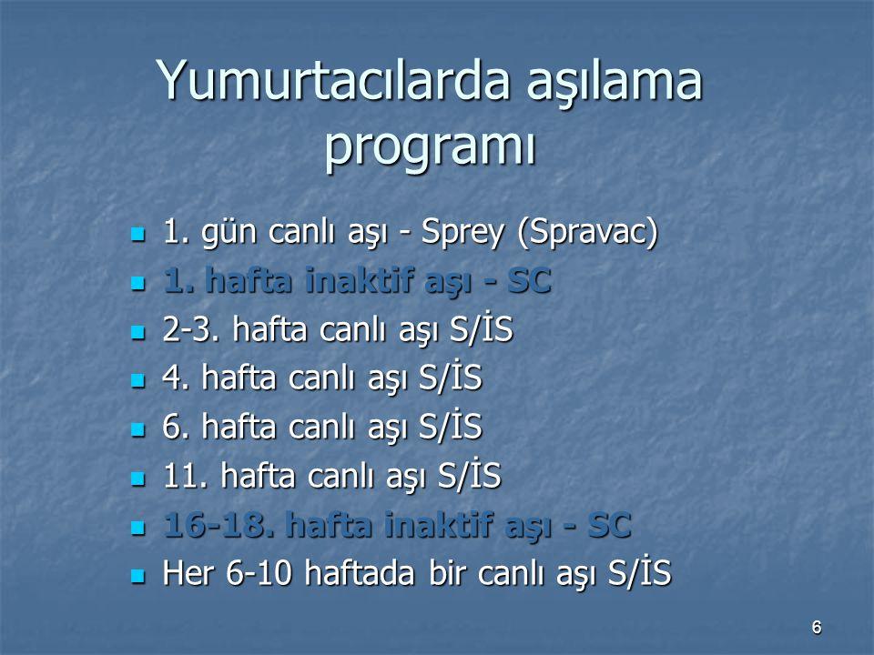 6 Yumurtacılarda aşılama programı 1. gün canlı aşı - Sprey (Spravac) 1.
