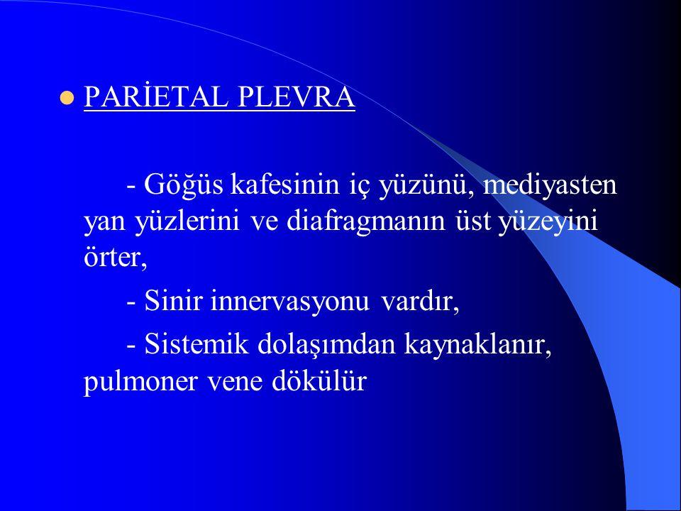 PARİETAL PLEVRA - Göğüs kafesinin iç yüzünü, mediyasten yan yüzlerini ve diafragmanın üst yüzeyini örter, - Sinir innervasyonu vardır, - Sistemik dolaşımdan kaynaklanır, pulmoner vene dökülür