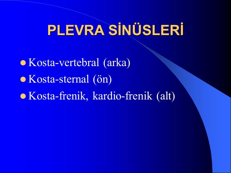 PLEVRA SİNÜSLERİ Kosta-vertebral (arka) Kosta-sternal (ön) Kosta-frenik, kardio-frenik (alt)