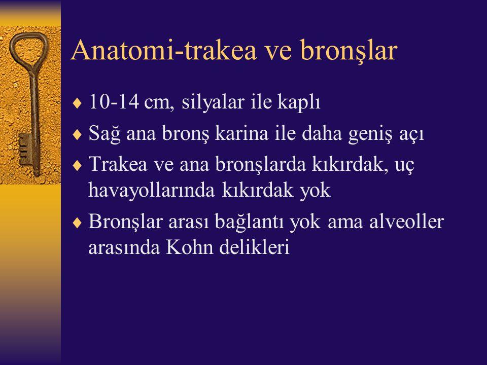 Anatomi-trakea ve bronşlar  10-14 cm, silyalar ile kaplı  Sağ ana bronş karina ile daha geniş açı  Trakea ve ana bronşlarda kıkırdak, uç havayollar