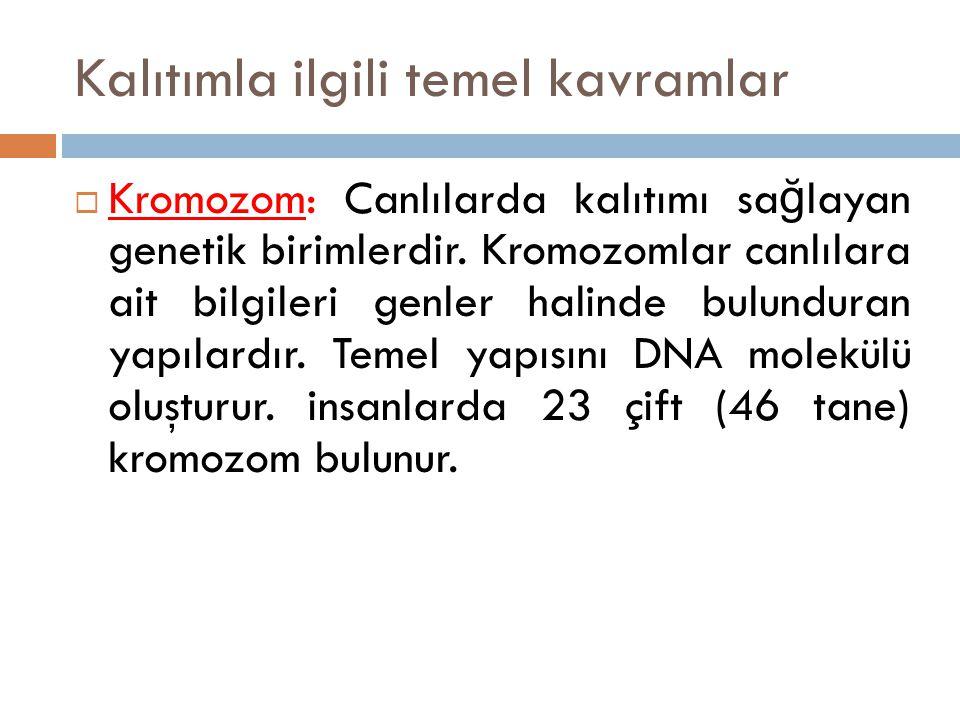 Kalıtımla ilgili temel kavramlar  Kromozom: Canlılarda kalıtımı sa ğ layan genetik birimlerdir.
