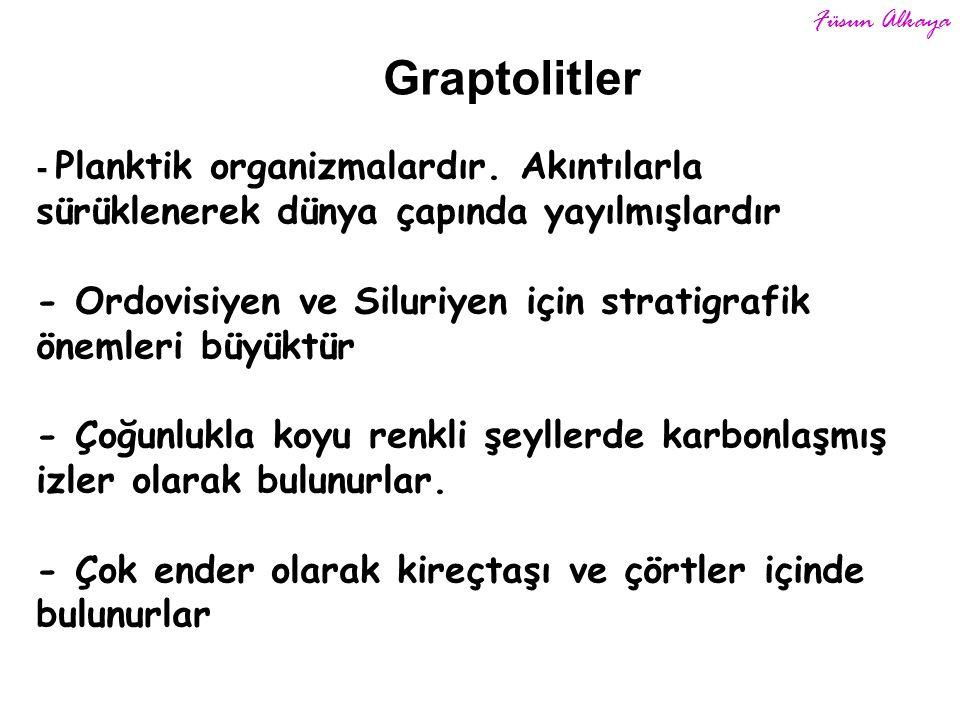 Graptolitler - Planktik organizmalardır.