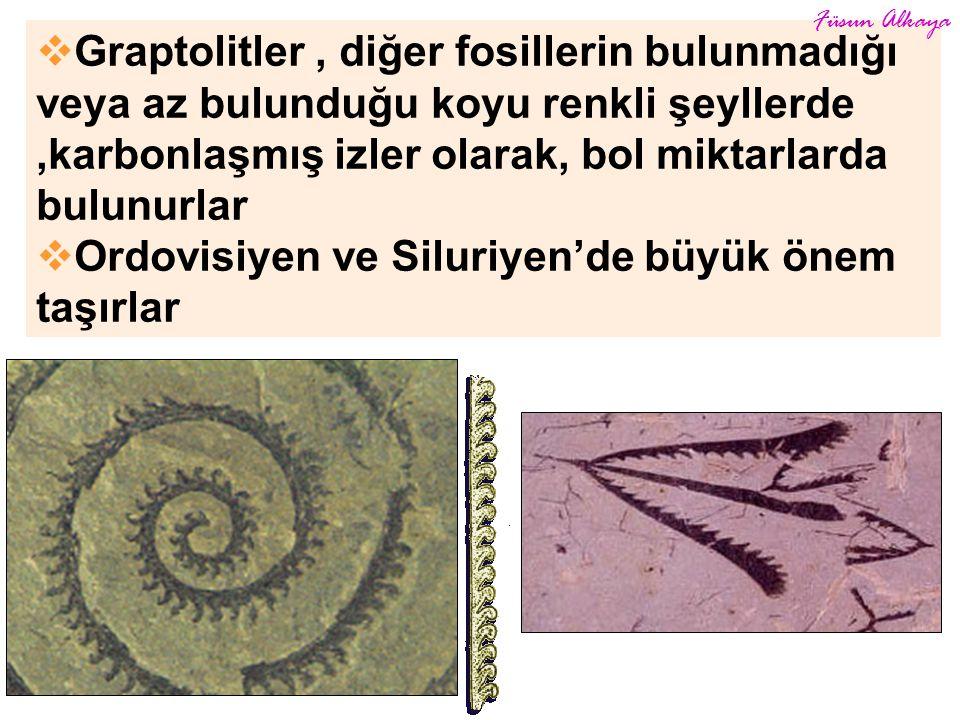  Graptolitler, diğer fosillerin bulunmadığı veya az bulunduğu koyu renkli şeyllerde,karbonlaşmış izler olarak, bol miktarlarda bulunurlar  Ordovisiyen ve Siluriyen'de büyük önem taşırlar Füsun Alkaya