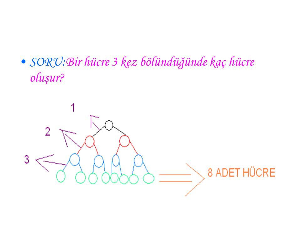 SORU:Bir hücre 3 kez bölündüğünde kaç hücre oluşur?