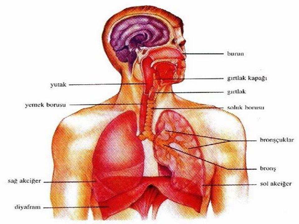 SOLUNUM SİSTEMİ HASTALIKLARI VEREM:Akciğer dokusunun iltihaplanması KABAKULAK:Kulak altı tükürük bezlerinin iltihaplanması KIZAMIK:Vücutta bağışıklık kazanırken kırmızı lekelerin oluşması SUÇİÇEGİ:Vücutta bağaşıklık kazanırken deride iz bırakan lekelerin oluşması.