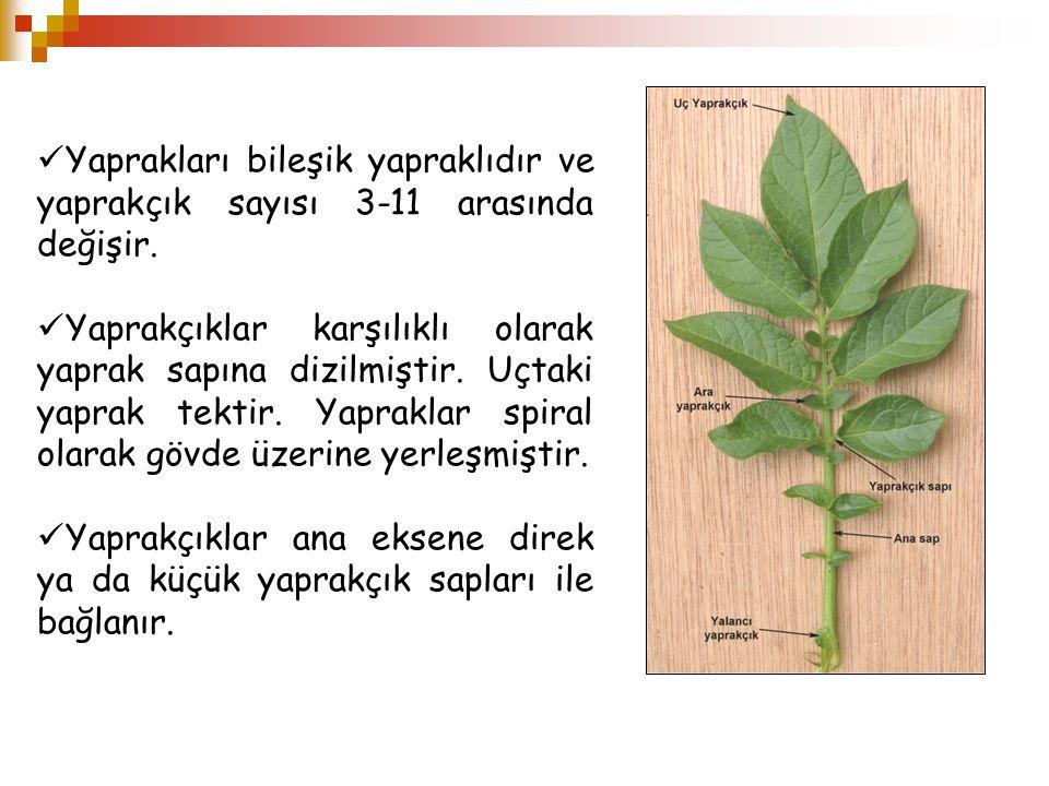 Yaprakları bileşik yapraklıdır ve yaprakçık sayısı 3-11 arasında değişir. Yaprakçıklar karşılıklı olarak yaprak sapına dizilmiştir. Uçtaki yaprak tekt