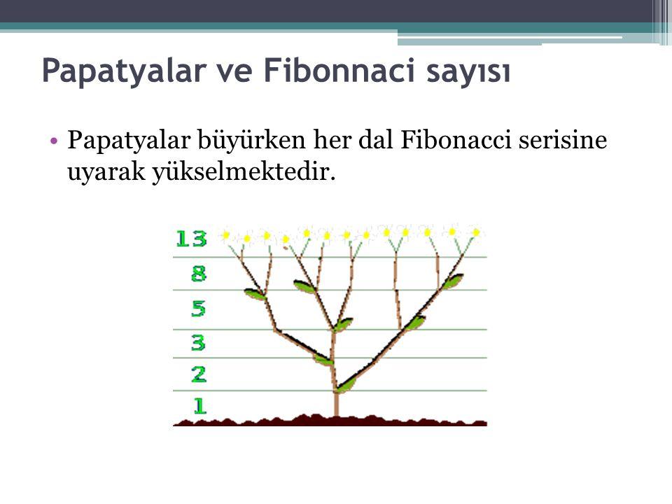 Papatyalar ve Fibonnaci sayısı Papatyalar büyürken her dal Fibonacci serisine uyarak yükselmektedir.