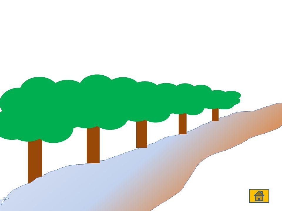 Sütun Grafiği Örneği Bir çocuğun yaşına göre kütlesi ölçülerek tablo hazırlanır.