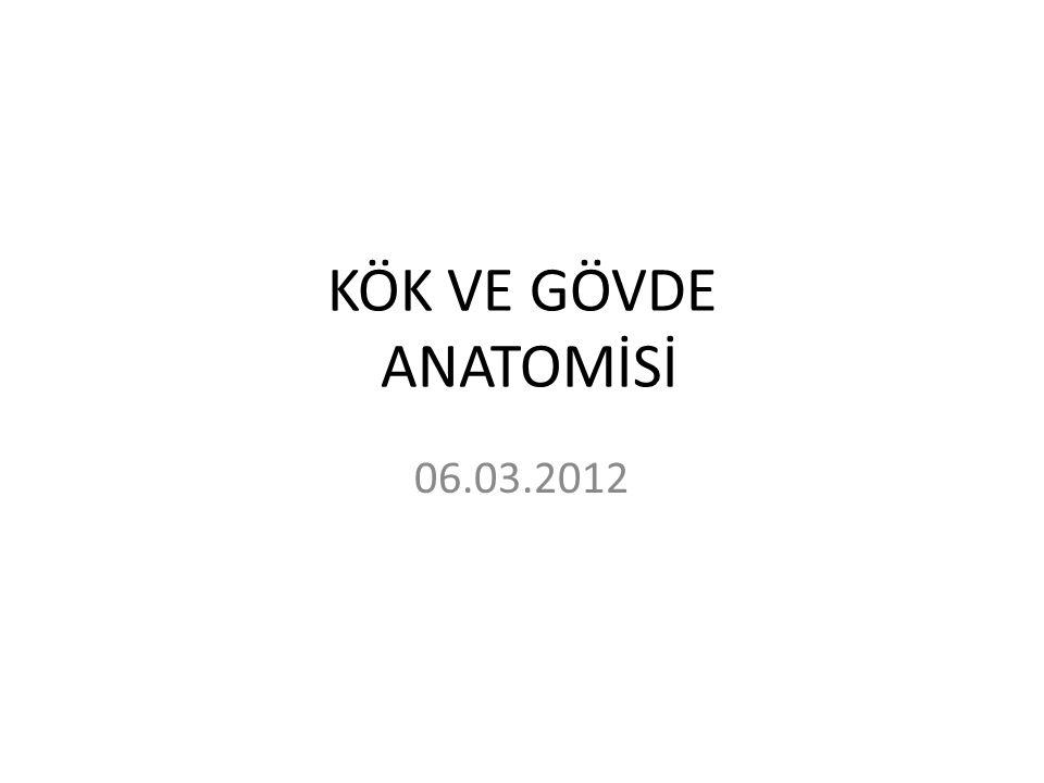 KÖK VE GÖVDE ANATOMİSİ 06.03.2012