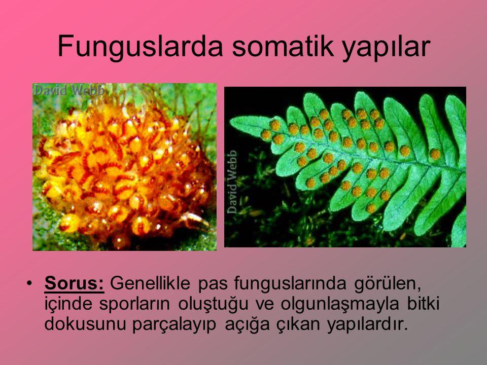 Funguslarda somatik yapılar Sorus: Genellikle pas funguslarında görülen, içinde sporların oluştuğu ve olgunlaşmayla bitki dokusunu parçalayıp açığa çı
