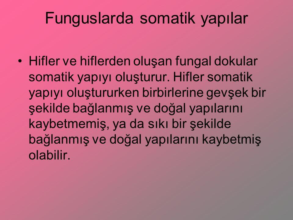Funguslarda somatik yapılar Hifler ve hiflerden oluşan fungal dokular somatik yapıyı oluşturur. Hifler somatik yapıyı oluştururken birbirlerine gevşek
