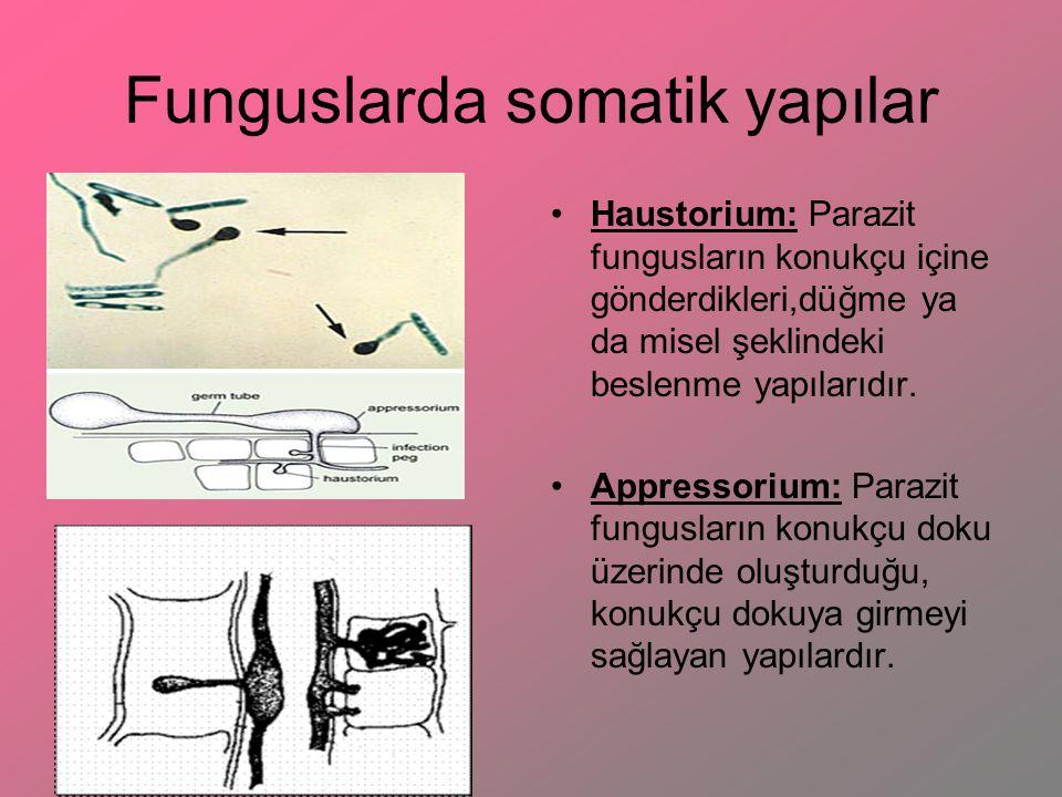 Funguslarda somatik yapılar Haustorium: Parazit fungusların konukçu içine gönderdikleri,düğme ya da misel şeklindeki beslenme yapılarıdır. Appressoriu