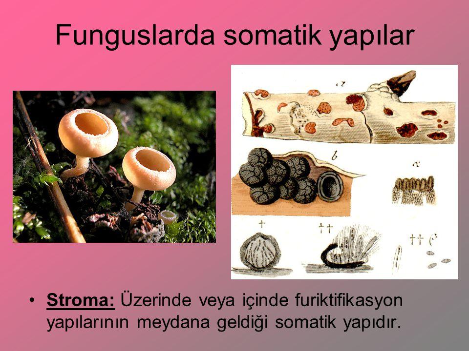Funguslarda somatik yapılar Sorus: Genellikle pas funguslarında görülen, içinde sporların oluştuğu ve olgunlaşmayla bitki dokusunu parçalayıp açığa çıkan yapılardır.