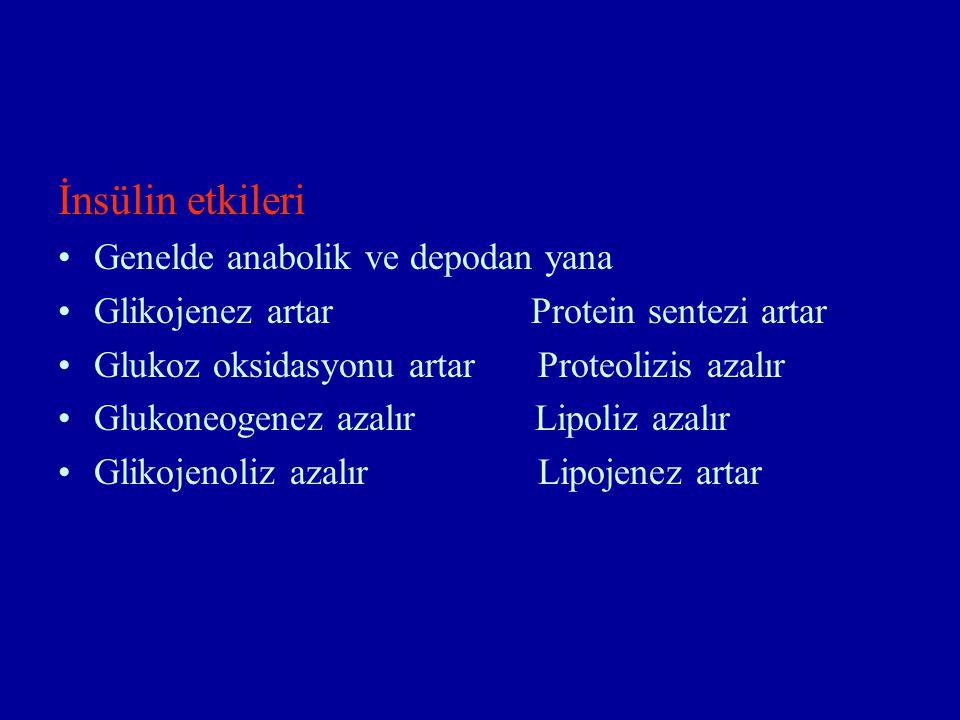 İnsülin etkileri Genelde anabolik ve depodan yana Glikojenez artar Protein sentezi artar Glukoz oksidasyonu artarProteolizis azalır Glukoneogenez azalır Lipoliz azalır Glikojenoliz azalır Lipojenez artar