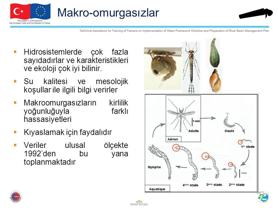 Makro-omurgasızlar  Hidrosistemlerde çok fazla sayıdadırlar ve karakteristikleri ve ekoloji çok iyi bilinir.  Su kalitesi ve mesolojik koşullar ile
